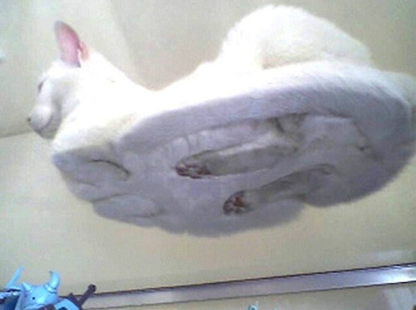 cats-sitting-glass-table-10